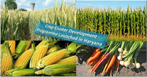 Crop Cluster Development Programme Launched in Haryana