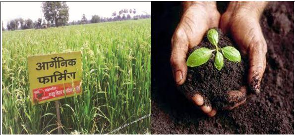 हरियाणा में जैविक कृषि उत्पादों की प्रामाणिकता के लिए ओर्गेनिक सर्टिफिकेशन एजेंसी स्थापित होंगी
